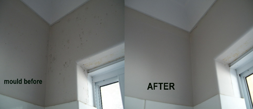 Bathroom Wall Mould Removal
