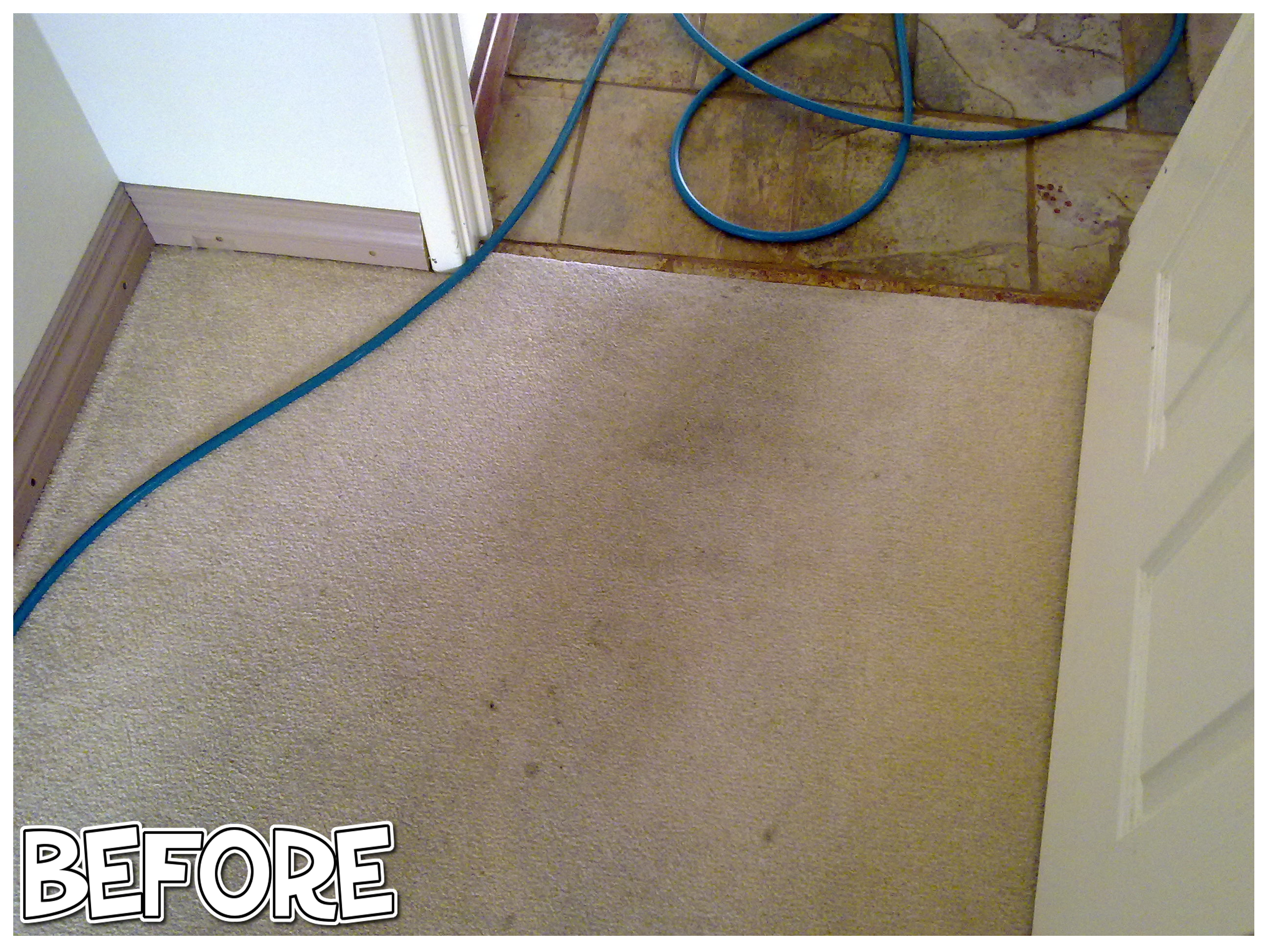 carpet cleaning marmion